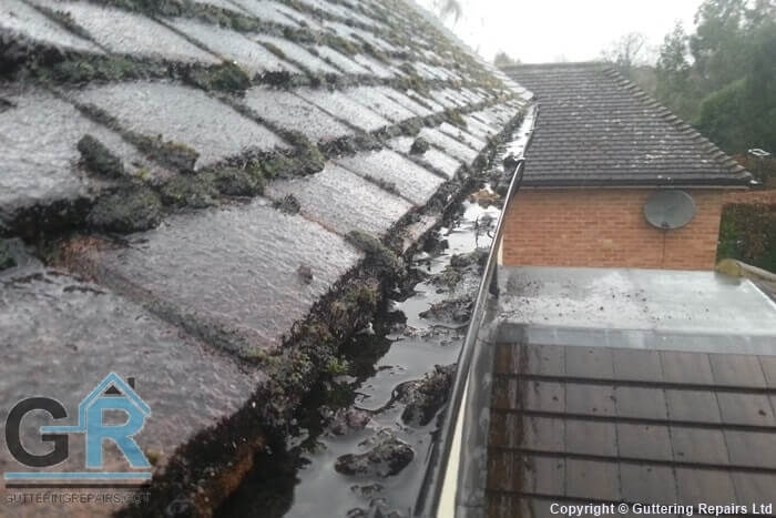 Roof gutters clogged with leaves and moss on a detached home.