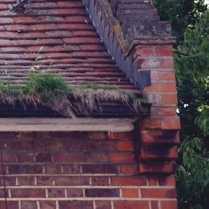 Grass Growing in Roof Gutter